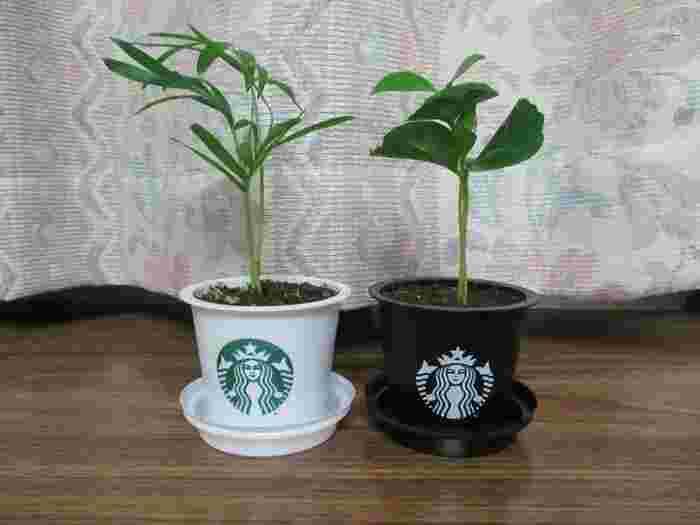 ミニグリーンなどを入れても可愛い♡100均などで売られている小さめの観葉植物を入れても良さげです。