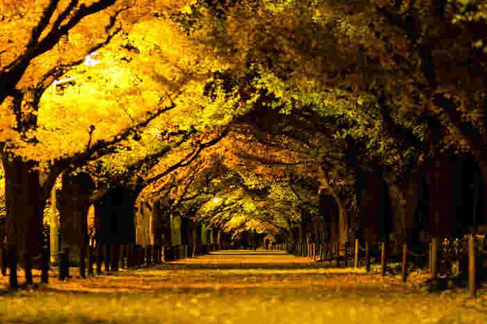 夜のイチョウ並木には、昼間とはまた違った神秘的な美しさがあります。ベンチに腰かけてイチョウをながめているだけで、贅沢な気分になれますよ。
