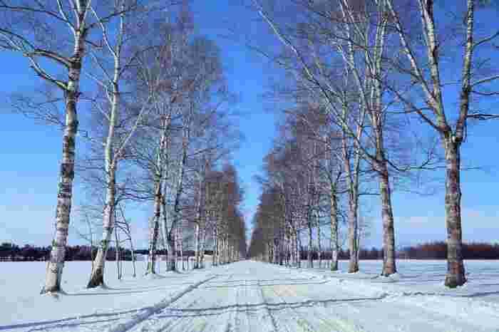 「十勝晴れ」という言葉もあるほど、晴れることが多い冬の十勝平野。抜けるような青空のもとを犬たちと一緒に駆け抜ける、北海道でしかできない体験をしてみてはいかがでしょうか。
