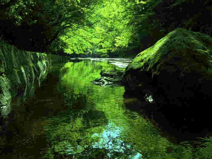 紅葉で有名な養老渓谷。千葉県大多喜町から市原市を流れる養老川によって形成された渓谷は、豊かな水と緑に囲まれていてマイナスイオンをたっぷり感じられます。