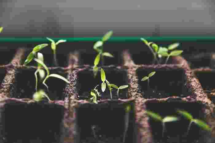 ミネラルや微生物が土の中でより良い状態で維持され、年月とともに熟成されていきます。栄養たっぷりの熟成された土は、ベランダ菜園にはぴったりの土です。