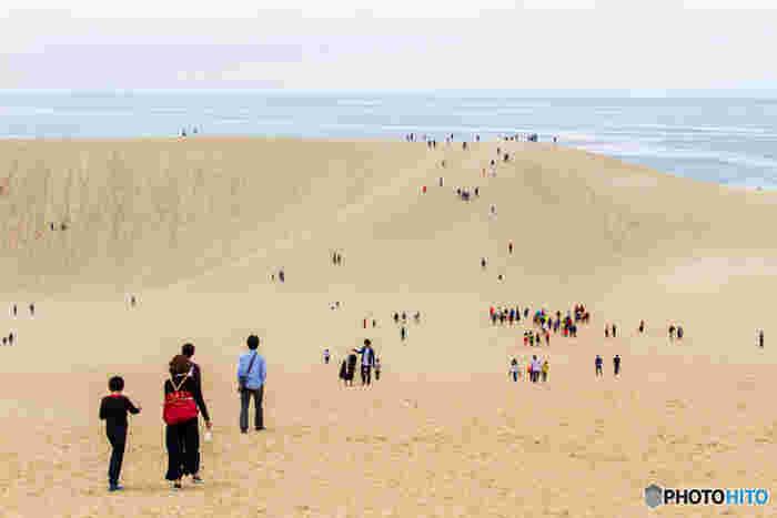 砂丘の入口から見えてくる小高い砂の丘は「馬の背」と呼ばれる第二砂丘列で、40メートル以上の高低差があります。徒歩で登ることが出来るので、スニーカーなどの履きなれた靴で、目指してみましょう。「馬の背」までたどりつくと、そこからは日本海の海岸線を一望することができます。