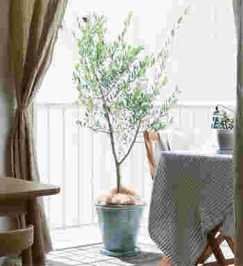 背が高めの観葉樹をディスプレイすると、グリーンの面積が増えてもっと自然な空間が作れそう。