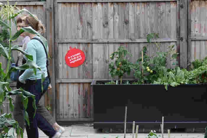 「農業」が身近になっていることの理由のひとつに「都市農業」への注目の高まりがあります。ビルの屋上や公園の一角などに「畑」をつくり、都市の一部で野菜を栽培する「アーバンファーミング」スタイルは現在世界中で広がりをみせています。