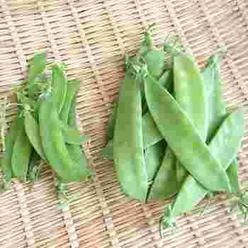 マメ科のサヤエンドウ(絹サヤ、スナップエンドウなど)も4月から旬を迎える食材です。ビタミンCや食物繊維、βカロテンも豊富で栄養素も高い緑黄色野菜の一つです。乾燥に弱いのでなるべく早く食べたほうが美味しくいただけます。