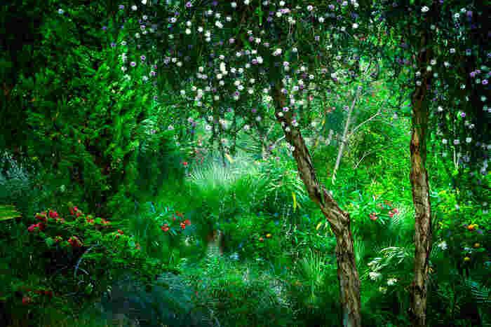 @Bernhard Hartmann Le Jardin Eden 2
