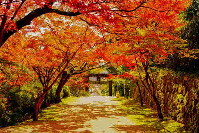 今年の秋の一般公開は、11月15日~11月23日です。紅葉は11月中旬が見頃なので、一般公開の時には美しい紅葉を堪能できそうですね。おの隣には「仁比山神社」があり、こちらの紅葉も綺麗なのでぜひ立ち寄ってみてください♪