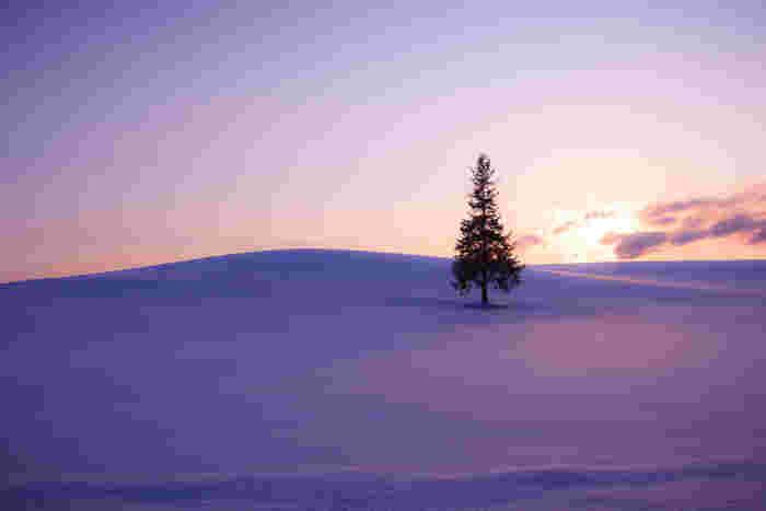 やっぱりこちrはその名前からして冬の雪景色がよく似合っています。