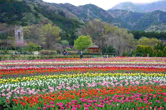 公園内のチューリップ畑を遠望してみましょう。カラフルな花々が大地を覆いつている様を眺めていると、まるで童話の世界に入り込んだような錯覚を感じます。