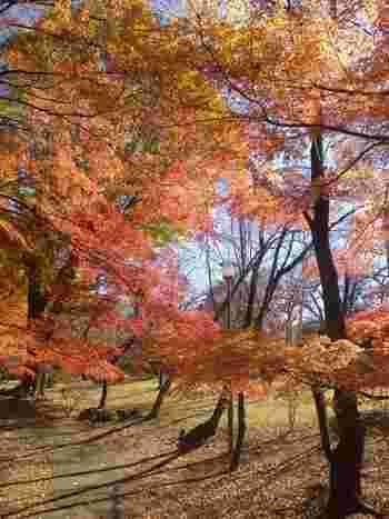 3万坪の大庭園は、紅葉が楽しめたり、ショートゴルフコースやテニスコートまで完備されており1日ゆったりと過ごすことができます。