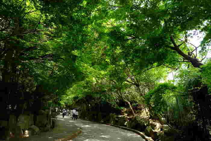 緑の木立に囲まれた「鎌倉文学館」。  「鎌倉文学館」は本館内や庭園もさることながら、文学館までのアプローチも魅力の一つ。木漏れ日の中、ゆっくりと坂を上れば、明治期から別荘地として栄えた鎌倉の雰囲気を、今もなお感じることができます。