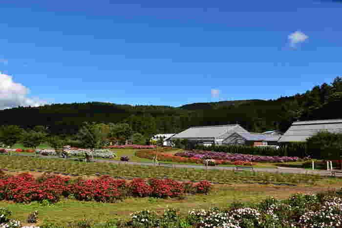 有料エリアにも、親子で楽しめるテーマパークや熱帯植物が鑑賞できるフローラルドームなど、見どころも満載。一人旅でも、女子旅やファミリー旅でも、もちろんデートでも楽しめること間違いなしです。