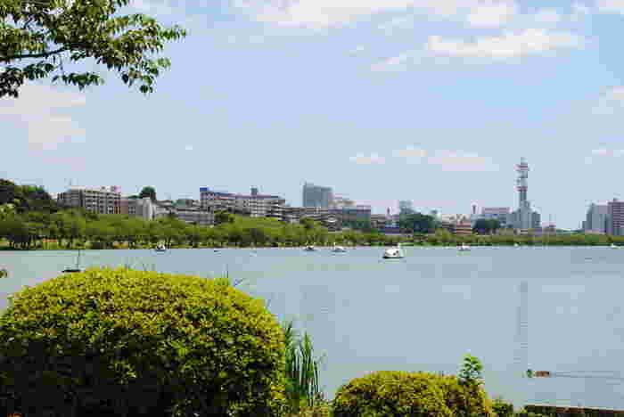 JR水戸駅から桜並木を歩いて約15分ほどのところにある「千波湖」。偕楽園と隣接した湖で、江戸時代には水戸城のお堀として使われていた歴史のある湖です。