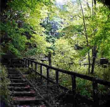 川崎市日本民家園は生田緑地という自然公園の中にある1つの施設です。生田触知には、雑木林や湿地、湧水などの自然が溢れた癒しスポット。ゲンジボタルやホトケドジョウなどの貴重な生物もいます。