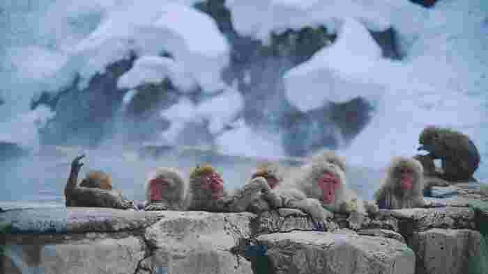 冬には1mもの雪が積もる山の中。温泉地と言えど、あるのは施設が2つだけです。そのうちのひとつが「地獄谷野猿公苑(やえんこうえん)」さん。タイミングが合えば見れるかもしれない、雪の中温泉に入るお猿さん=スノーモンキーは、海外の方に大人気!気持ちよさそうなお猿さんに、思わずほっこり♪