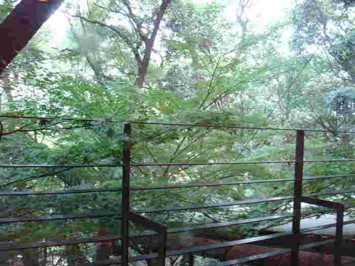 窓の外には上野の杜が。四季折々の景色もお食事を引き立ててくれます。