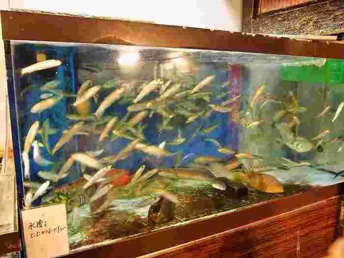 店内の水槽で勢いよく泳ぐ魚をそのまま調理しテーブルへ届ける、活けイワシ料理の専門店「いわし舟」。お造り、煮物、酢の物、揚物、丼、寿司、茶漬けなどなど、新鮮取れたてのイワシの旨さを堪能できます。