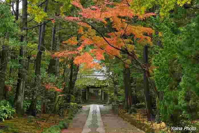 四季折々に美しい景色をみせてくれる「鎌倉」は、紅葉の美しい季節も散策するのにぴったり。そこで、紅葉を眺めながらお寺を巡って、少し歩き疲れたらお抹茶をいただく♪なんて素敵なお出かけはいかがでしょうか? 今回は、おいしいお抹茶がいただける、おすすめの鎌倉のお寺5選をご紹介します。