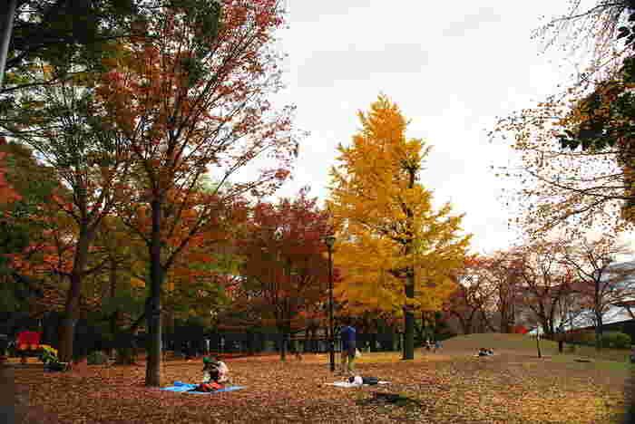 整備された噴水・広場・遊具のほか、紫陽花・桜並木を散策できる遊歩道があり、一面黄金色に染まる紅葉の季節も綺麗です。 児童エリアには、D51型SLと1970年代に走っていた都電荒川線車両が保存展示されています。