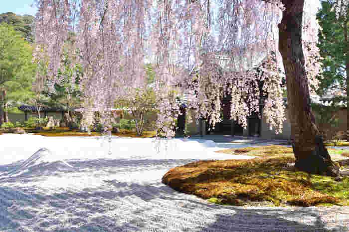 春の京都は、例年20度前後まで気温が上がりますが、朝晩はまだまだ肌寒い季節。アウターにプラスできる、カーディガンやストールなどコンパクトな羽織ものを用意しておくのがおすすめ。