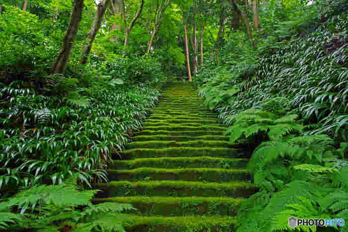 「妙法寺」は鎌倉駅から徒歩約12分。観光地化されていない自然なままの雰囲気が魅力で青々とした苔の石段は周りの緑と相まってなんとも幻想的。観光客も多くないので穴場スポットとしても名前のあがるお寺です。
