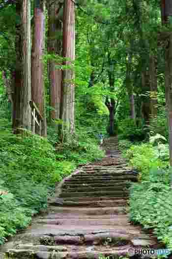 新緑の季節は歩くだけでも気持ちよい、戸隠神社。ただし、冬の雪が多い期間は御朱印をいただく場所も異なり、歩きにくくなるので、事前にしっかりと情報をチェックしてから訪れるようにすれば、安心して御朱印集めをできるかも。