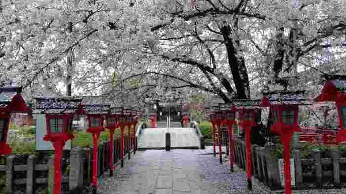 源経基を祭神とし源氏三神社のひとつと言われる「六孫王神社(ろくそんのうじんじゃ)」は桜の穴場スポット。東寺からほど近い場所にあるとても小さな神社ですが、ソメイヨシノやしだれ桜が立ち並び、満開の時期には中央の太鼓橋が桜のトンネルに大変身。地元民はよくお花見に訪れる場所ですが、あまり知られていない場所でもあるのでゆっくり桜を愛でることができるおすすめスポットです。