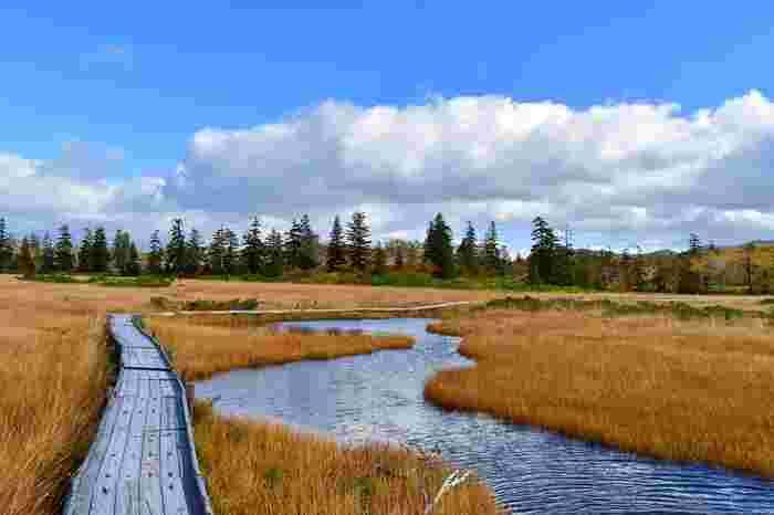 神仙沼には、エゾカンゾウ、ワタスゲなど様々な草花が水辺を彩り、湿原には遊歩道が整備されています。美しいニセコ山系の高原に位置する湿原をハイキングしながら絶景に魅了されてみてはいかがでしょうか。