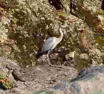 岩場には水鳥の姿が。こういった鳥の名前も船頭さんが教えてくれます。
