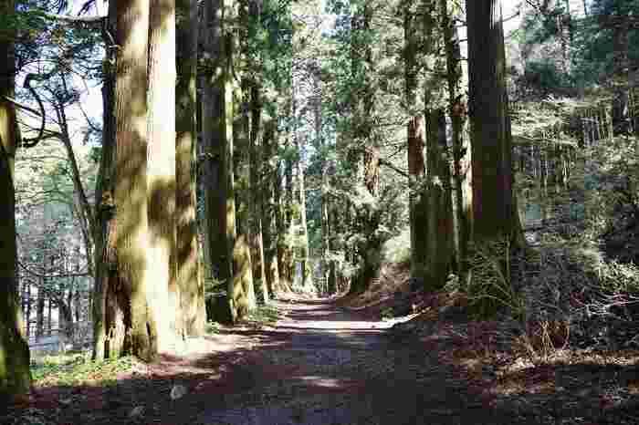 芦ノ湖の景色に飽きたのなら、元箱根から恩寵箱根公園(0.5km)まで続く杉並木を歩くのもお勧めです。特に日差し厳しい夏場は、湖畔よりも涼やかです。