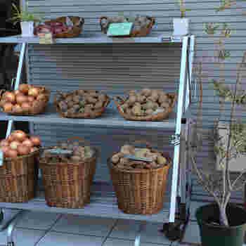 お店ではオーガニック野菜の販売も行われています。お店で食べておいしかったお野菜をおうちでお料理してみては?