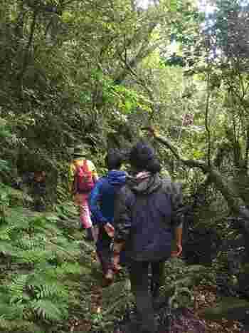 ただし御蔵島の山や森の散策はごく一部を除き、事前に現地ガイドの予約が必要なので注意しましょう。