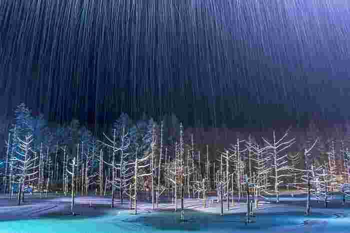 とくにここ数年、冬期に行われている夜間のライトアップは、より幻想的な光景を見ることができるとあって大人気。