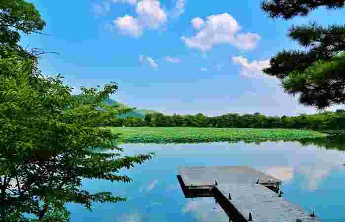 畔には、茶室「望雲亭」、嵯峨天皇心経写経1150年を記念して建立された「心経宝塔」、『今昔物語』で百済川成が作庭したものと伝わる「名古曽の滝跡」、石仏が点在しています。  また、江戸中期に創建された大覚寺本堂「五大堂」が池に面しています。「五大堂」の東側には、池にせり出した観月台が設けられ、ここから眺める大沢池の景色は格別です。【画像は、五大堂(本堂)の東面の「観月台」。】