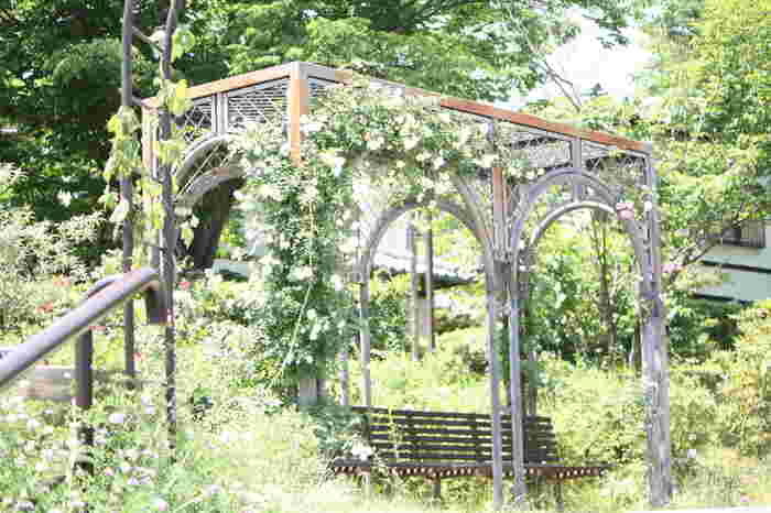 ハーブ関連商品で有名な「生活の木」が手がけるハーブ庭園が、埼玉県飯能市にあります。圏央道・狭山日高インターから15分ほどのところにあるので、首都圏からもアクセスしやすく、広い敷地では1年を通してさまざまなハーブが活き活きとした姿を見せます。