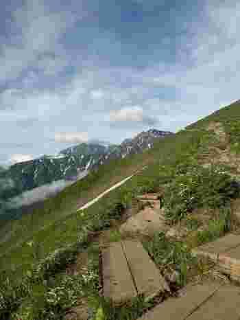 高山植物のお花などを見ながら景色を楽しむことが出来ます。