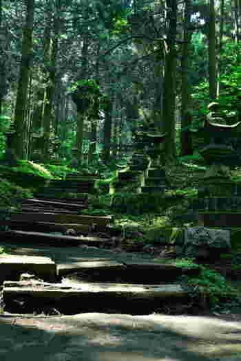 神社にあるご神木「なぎの木」は、縁結びのご利益があり、縁が長続きするともいわれます。光が射し込む光景は、荘厳で心が浄められます。