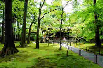 中に入ると緑が茂る広い庭が。 木々の下には苔が絨毯のように生えています。
