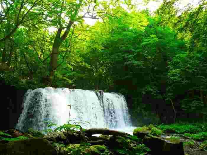 紅葉の季節が大人気の奥入瀬渓流ですが、新緑の季節もまた、違った風情を楽しむことができます。 4月、5月はまだまだ寒い奥入瀬渓流。 空気も透き通っていて、マイナスイオンをたくさん感じることができます。