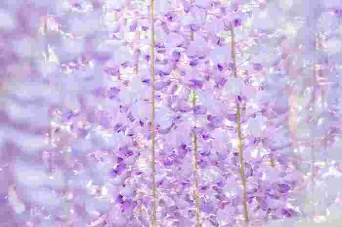 自然を表現した美しい日本語はこのほかにもたくさんあるので、これだ!という大好きな言葉に出会えるまで探してみるのも楽しいですね。