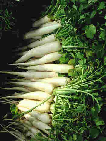 日本で流通する大根の90%以上は、葉に近い上部が緑色の「青首大根」です。それ以外にも、地域特産など特徴ある他品種がいくつかあります。