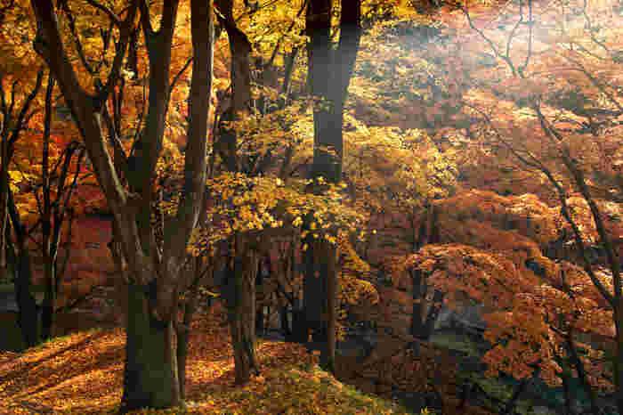 利根川の清らかな流れが造り出した渓谷で、流れに沿って遊歩道が整備されていて紅葉を見ながらの散策にピッタリのスポットです。