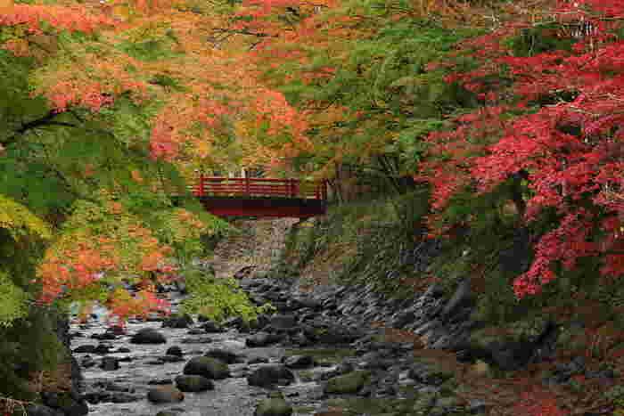 伊豆半島の内陸部に位置する中伊豆エリア。修善寺温泉が有名ですよね。海は面していないものの、自然いっぱいの中伊豆は癒やしの旅にぴったりの場所です。