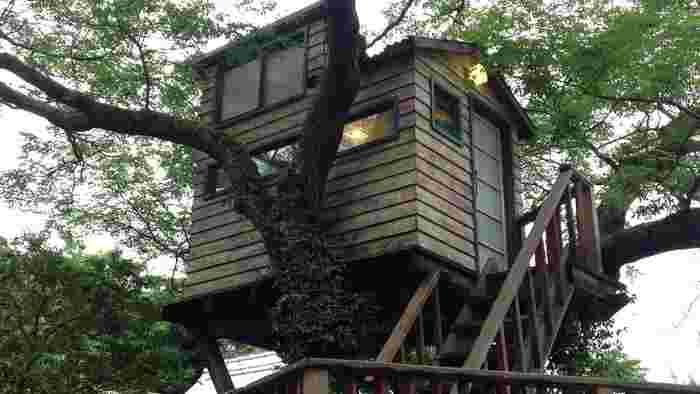 庭にあるセンダンの木にはカフェの特等席が・・・・ 樹齢60年のセンダンの木。この小さなツリーハウスはツリーハウスクリエイターである小林崇さんによる作品です。 夢と自由が詰まった小さな空間は、子供も大人も楽しめる秘密基地。