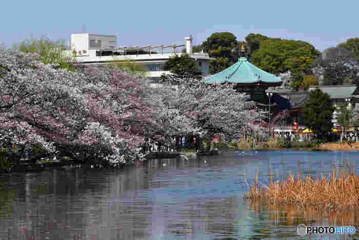 どこに何がある?上野恩賜公園界隈の美術館・博物館をおさらい♪