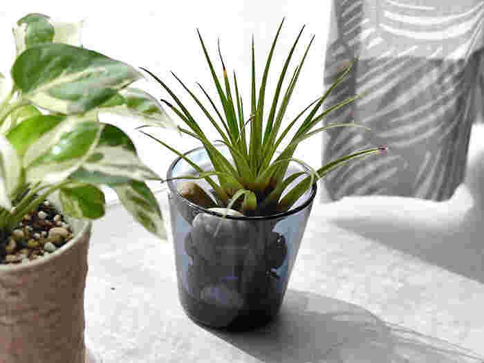 安定感がありシンプルなので、グリーンや季節のお花をちょこっと生けるのにもおすすめ。素材にこだわる方にうれしい無鉛ガラスです。