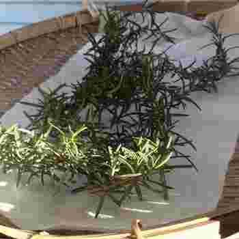 収穫したローズマリーは、その日にすぐに使わないのであれば水で洗ってから乾燥させておきましょう。また、小分けにして冷凍保存しておくと便利です。調理やハーブティなどに利用したい時には、自然解凍させればすぐに使えます。
