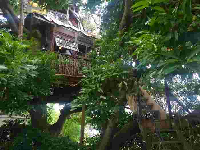 木と一体化している、ツリーハウスカフェの「なんじゃもんじゃカフェ」。横浜・三ツ沢下町のお店です。