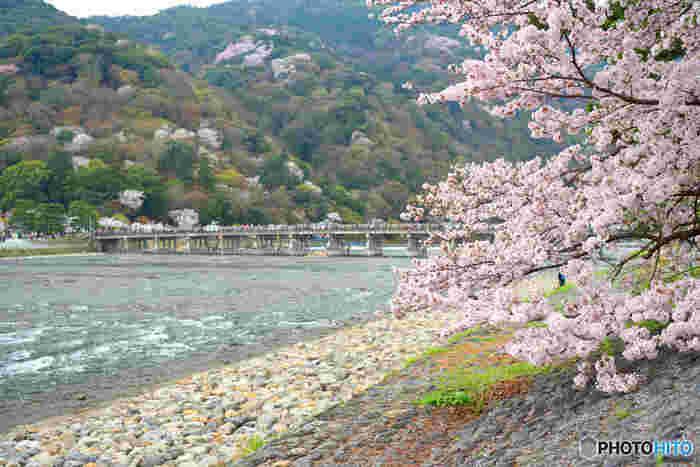 もちろん混雑は避けられないのですが、嵐山には桂川(大堰川・おおいがわ)が流れており川岸も広め。渡月橋やお店が並ぶ道路は混みあっていますが、広い川岸に出れば屋台なども並び、人ごみを離れて川沿いに咲く桜をのんびり楽しめるほか、渡月橋の向こう側に咲く山桜も楽しむことができますよ。市街地の桜とは違う、自然のままの素朴な桜景色も魅力的です。