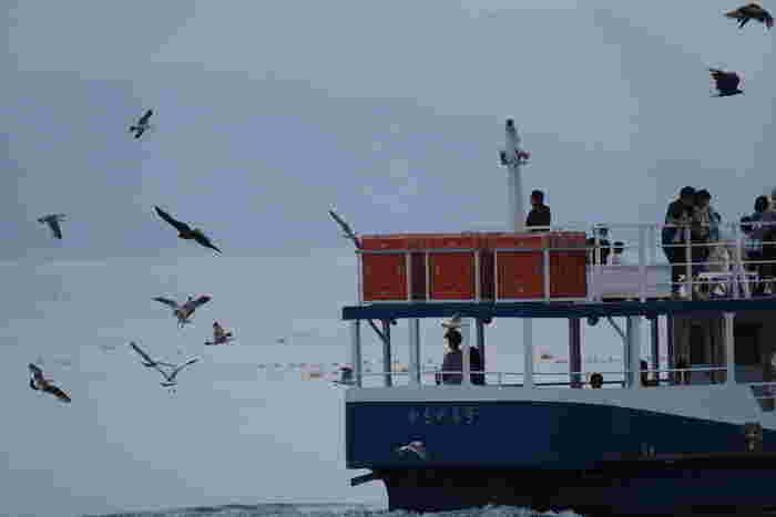 舟屋が軒を連ねる伊根湾では、たくさんの遊覧船が出航しています。心地よい潮風に吹かれながら、カモメが舞う伊根湾を遊覧船で一周してみるのもおすすめです。